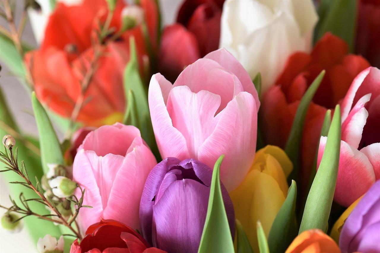 Bielsko Info Kwiaty Na Dzien Kobiet Jakie Kwiaty Wreczyc 8 Marca